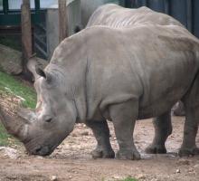 1229-zoo_de_lunaret-34.jpg