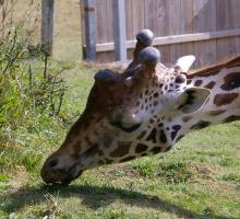 1254-parc-zoo-branfere-56.jpg
