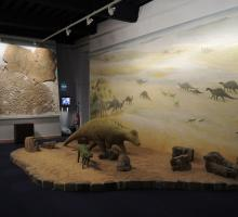 1281-museum-histoire-naturelle-saone-et-loire.jpg