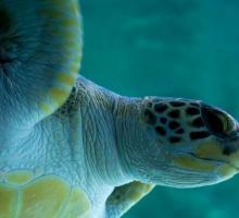 1285-aquarium-de-biarritz-64.jpg