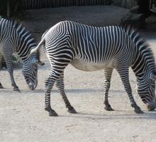 1288-zoo_mulhouse_68.jpg