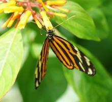 1306-museum-des-papillons-et-des-insectes-savoie.jpg