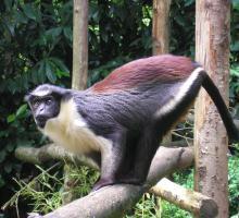 1313-zoo-de-champrepus.jpg