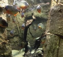 1590-aquarium-des-tropiques-allex-drome-auvergne-rhone-alpes.jpg