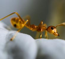 1824-fourmi-micropolis-insecte-12.jpg