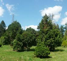 1879-arboretum-chevreloup-yvelines.jpg