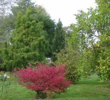 1957-arboretum-de-la-croix-verte-deux-sevres.jpg
