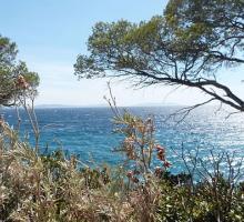 2023-domaine-du-rayol-jardin-mediterraneen-var.jpg