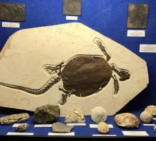 840-prehistorama-rousson-gard.jpg