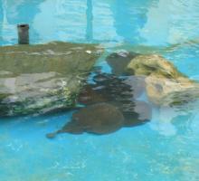 910-musee-aquarium-d-arcachon-gironde.jpg