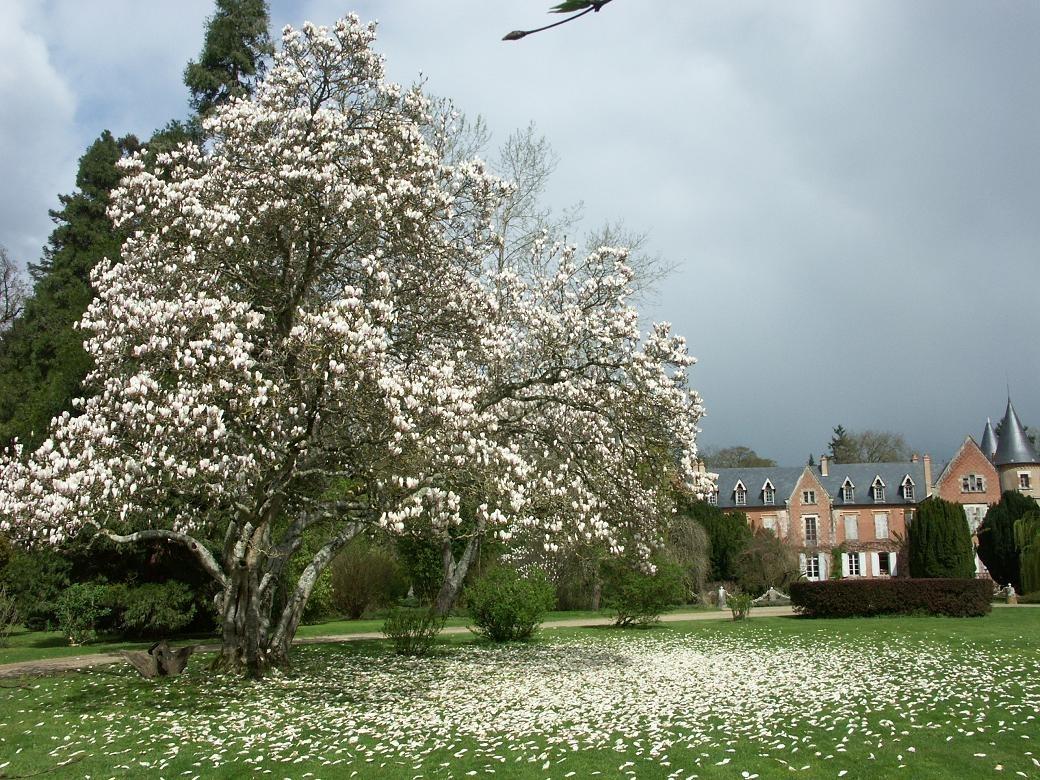 941-arboretum-de-balaine-allier.jpg