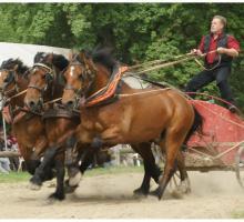 2246-la-michaudiere-cheval-de-trait-61.jpg