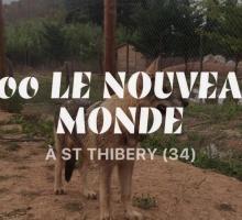 2446-zoo-le-nouveau-monde-st-thibery-34.jpg