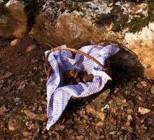 2471-truffes-passion-limogne-en-quercy-lot-occitanie.jpg