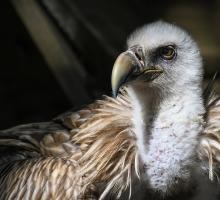 2527-maison-des-vautours-48-lozere.jpg