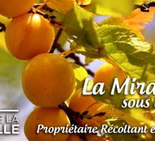 2658-la-maison-de-la-mirabelle-rozelieures.jpg