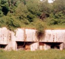 2664-fort-aux-fresques-ou-bois-de-brousse.jpg
