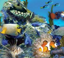 2676-aquarium_du_limousin.jpg