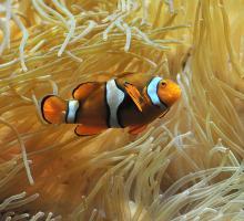 2714-musee-aquarium-de-nancy-poisson-clown.jpg