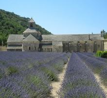 2731-abbaye_de_senanque_gordes-vaucluse.jpg