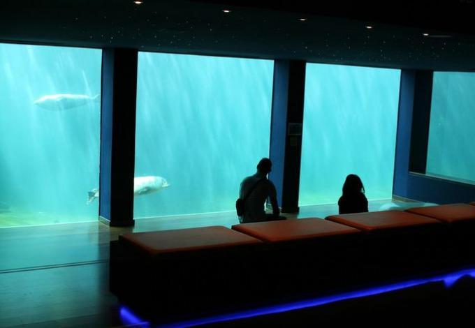 818-seaquarium-observatoire-sous-marin-gard.jpg