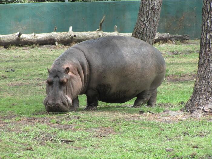 1225-zoo-du-bassin-arcachon.jpg