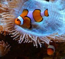 148-aquarium-tropical-pyrenees-agos-2.jpg