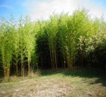 bambouseraie-des-marmettes-fontguenand.jpg