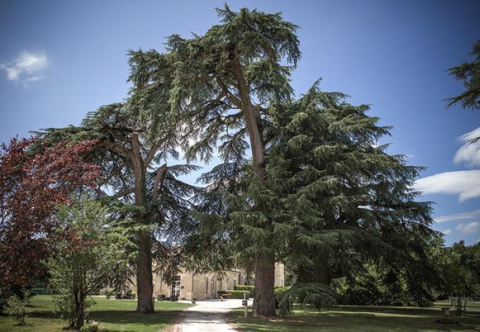 200-parc-arbres-centenaires-chateau-leognan.jpg