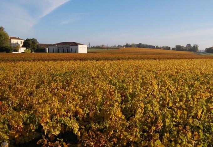 2444-chateau-haut-bages-vignoles.jpg