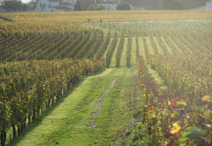 953-chateau-belloy-vignes.jpg